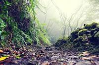 Wandern und mit der Natur Einssein