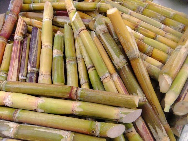 Zuckerrohr - Kanarische Produkte