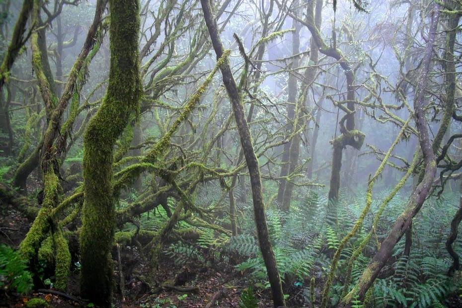 Cedro Wald - La Gomera